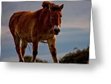 The Przewalski Horse Equus Przewalskii Greeting Card