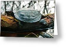 The Red Eared Slider Greeting Card