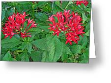 The Red Flowers Greeting Card