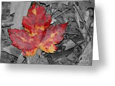 The Red Leaf Greeting Card