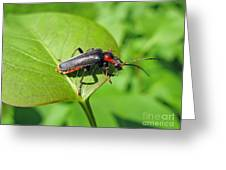 The Rednecked Bug- Close Up 2 Greeting Card
