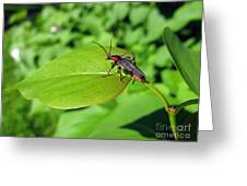 The Rednecked Bug On The Leaf Greeting Card