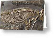 The Ribs And Spine Of Ichthyosaur Greeting Card