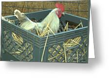 The Rooster That Laid A Golden Egg Greeting Card