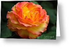 The Rose 2 Greeting Card