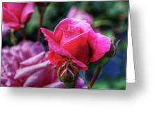 The Rose Greeting Card by Matthew Green
