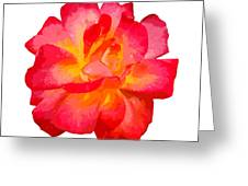 The Rose Patchwork Greeting Card