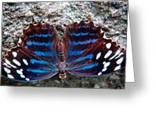 The Royal Blue Butterfly Greeting Card