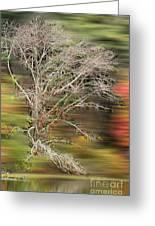 The Running Tree Greeting Card