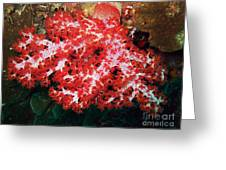 The Scarlet Soft Coral. Similan Islands Greeting Card