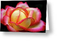 The Scent Of A Rose Greeting Card