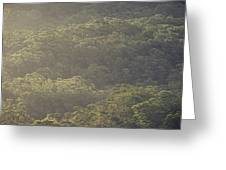 The Schlerophyll Forest Canopy Greeting Card