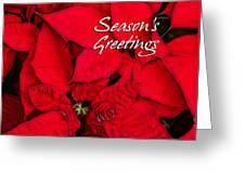 The Season's Velvet Touch Greeting Card