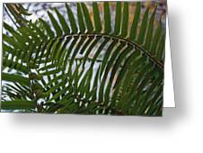 The Shade Of A Fern Greeting Card