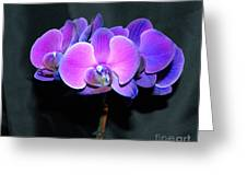The Shade Of Orchids Greeting Card