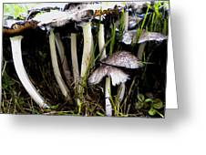 The Shroom Family Greeting Card