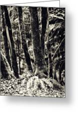 The Silent Woods Greeting Card