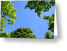 The Sky Through Trees Greeting Card