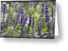The Smell Of Lavender  Greeting Card