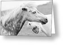 The Smiling Horse Greeting Card