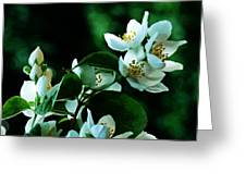 The Soft White Blossom  Greeting Card