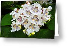 The Southern Catalpa Greeting Card