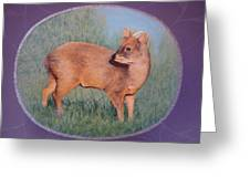 The Southern Pudu Greeting Card