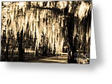 The Spanish Moss Greeting Card