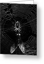 The Spider And The Fly . Black And White Greeting Card