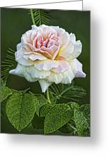 The Splendor Of The Rose Greeting Card
