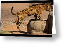 The Spotted Cat Greeting Card