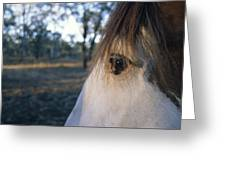 The Staring Eye Of A Clydesdale Horse Greeting Card