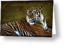 The Sumatran Tiger  Greeting Card