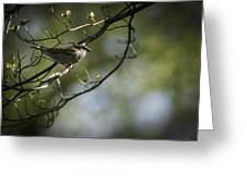 The Summer House Sparrow Greeting Card