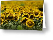 The Sunflower Patch II Greeting Card by Lisa Moore
