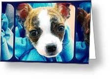 The Three Amigos Teacup Chihuahua Greeting Card