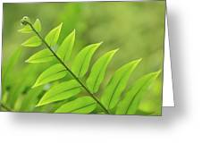 The Tip Of A Fern Greeting Card
