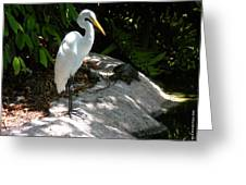 The Tortoise And The Heron Greeting Card
