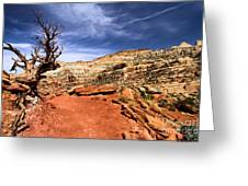 The Trail Ahead Greeting Card