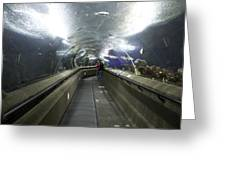 The Travelator At The Underwater World In Sentosa In Singapore Greeting Card