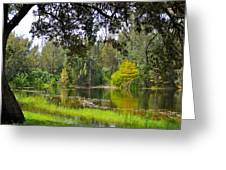 The Tree By The Lake Greeting Card