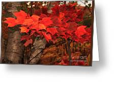 The True Beauty Of Autumn Greeting Card
