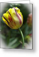 The Tulip Dance Greeting Card