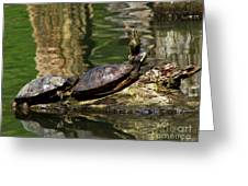 The Turtles Greeting Card