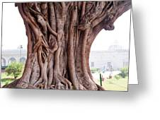 The Twisted And Gnarled Stump And Stem Of A Large Tree Inside The Qutub Minar Compound Greeting Card