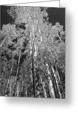 The Two Split Trees Bw Greeting Card