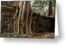 The Wall At Ta Prohm Greeting Card