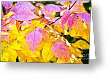 The Warm Glow In Autumn Abstract Greeting Card