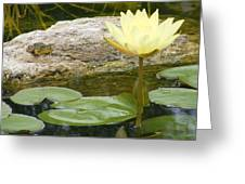 The Water Lily And The Frog Greeting Card