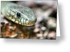 The Western Green Mamba Greeting Card by JC Findley